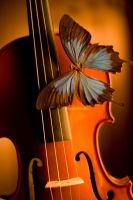 Violin by digitalholic