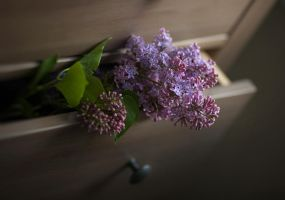 fresh lilacs 03 by Anti-Pati-ya