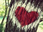 Love tree I by ZeljkaZ