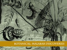 Botanicals from Malabar 1678 by remittancegirl