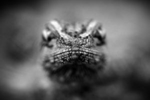 Point of Focus by Laki-Ilong