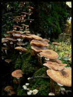 Mushrooms. by Linek