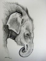 Elephant Baby Pencil by HouseofChabrier