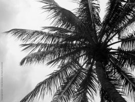 High Up: Coconut Palm by Skarlet-Raven