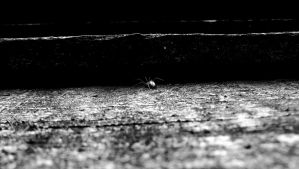 Spider Monochrome by graphic-rusty