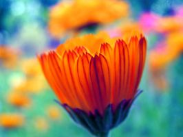 Colourful nature by Meireis