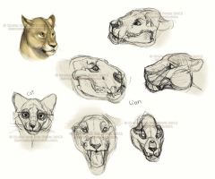 Lion skull study sketches by NadiavanderDonk