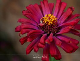 Colors of Life 5 by ttpixelzz