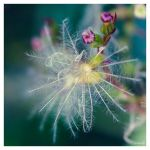 As a flake by Mademoiselle-P
