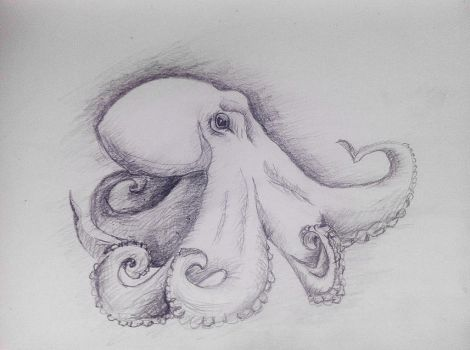 octopus. a quick sketch. by KateHubar
