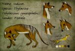 Thylacine Sheet Indium by Culpeo-Fox