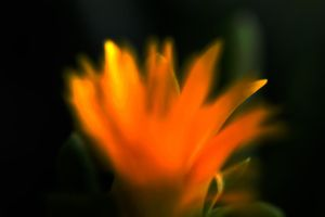 Flower Flame by SharPhotography