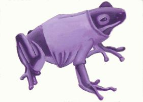 Purple Frog with a t-shirt by Rollingboxes