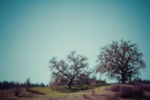 Two Trees by afterdeath