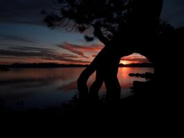 Sunset Tree by MartinGollery