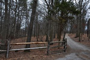 Wooded Dirt Road 4 by FairieGoodMother
