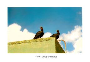 two turkey buzzards by genectorgurl