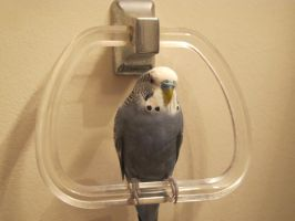 Clark in the Bathroom 1 by Windthin