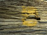 Real texture_bark-paint 02 by Aimelle-Stock