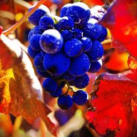 AutmnGrapes. by airicalush