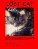 My friend lost her cat   PLEASE HELP! by lisabean