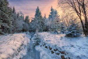 Magical Winter Wood by hessbeck-fotografix