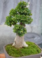 Bonsai by Wendybell80