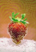 Strawberry fields forever by ambersome