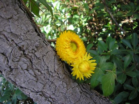 Tree Flowers by BonnieLime
