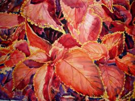 Painted Nettle by p-e-a-k