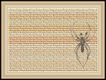 Lycosa Monticola Spider Wallpaper by Chlodulfa