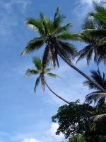 Costa Rica - Beach Palms by Amska
