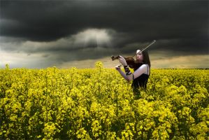 Fields of Gold by SafetyInNumbness