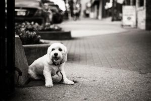 White puppy I by chirilas