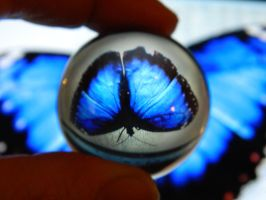 Blu's Butterfly Through A Crystal Ball by bluedragoneye
