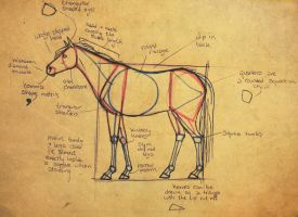 BASIC HORSE ANATOMY by vyxe