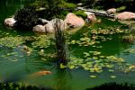 Japanese Koi Pond with Lilies by AndySerrano
