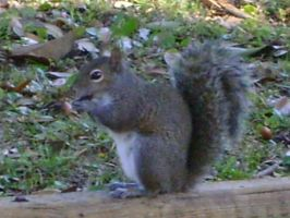 Close up on squirrel 10 by princesslillymono
