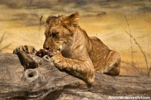 Hungry Lion Cub by amrodel