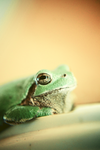 Frogger by msteenphotographer