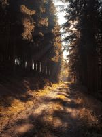 Autumn road 9 by FrantisekSpurny