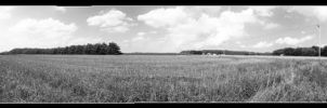 Field Panoramic by MarkKarrer