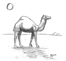 Have You Seen This Camel? by Ninquetolliel