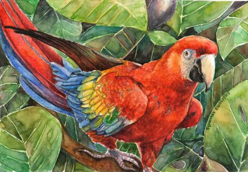 Scarlet Macaw by thaomani