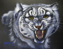 Dsoden's Snow Leopard by HouseofChabrier