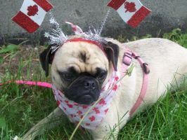 Canada Day Humiliation by PaintedTreasure