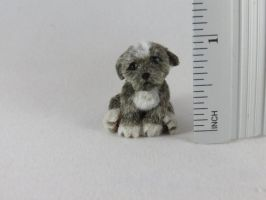 'Rocky' guilty staffie pup, now listed on ebay by squizzy7o7