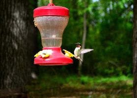Ruby-Throated Hummingbird by AmbitiousArtisan