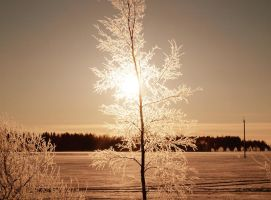 Cold light 4 by annbuht