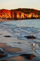 Sunrise seagull - Cape Leveque by wildplaces